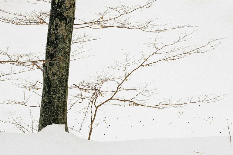 Landscape - 002 CE