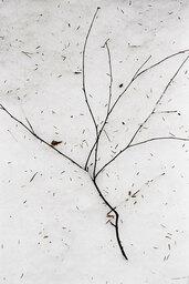 Gestural minimalism - 037 ST