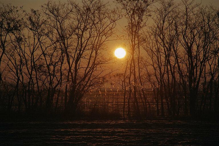 Landscape - 010 AL
