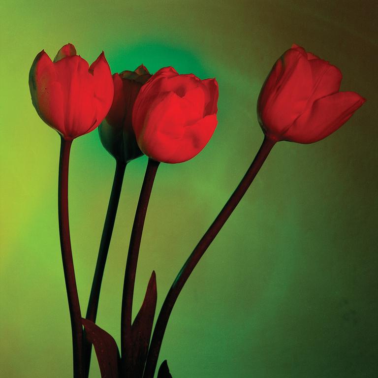 Tre tulipani