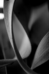 Progetto Blossfeldt #5
